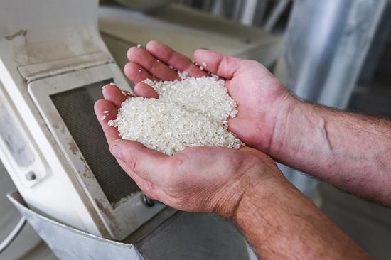 ВДагестане заработает завод попереработке риса