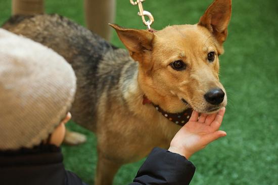 Бездомные собаки изКабардино-Балкарии приобрели дом вФинляндии