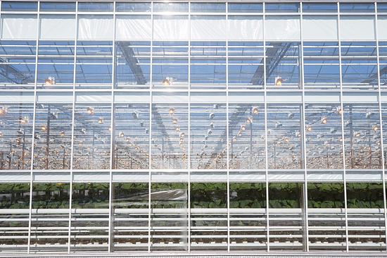 Тепличный комплекс на100 гектаров планируют построить наСтаврополье